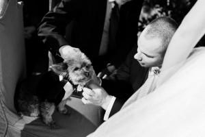 Hochzeitsfotografie Kassel-Sababurg-Urwald-2015-Inka Englisch Photography_17
