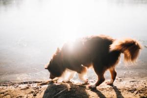 Wintergeschichte am See Homestory Familienshoot outdoor Kassel Berlin Inka Englisch Fotograf Kind Hund See Winter